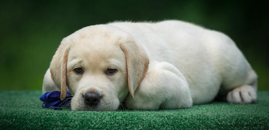 Натуральный рацион щенка